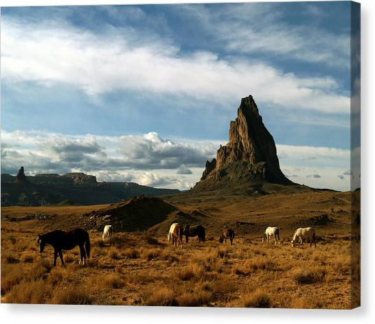 Navajo Horses At El Capitan Canvas Print