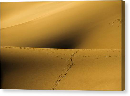 Navel Of The Dunes Canvas Print