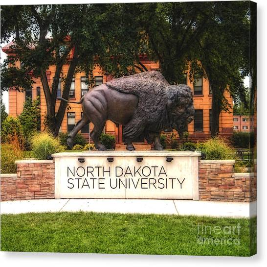 Ndsu Bison Canvas Print