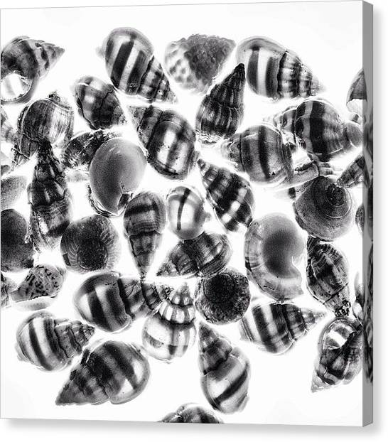 Seashells Canvas Print - Negative Exposure Of Image Taken With A by Jesse Vargas