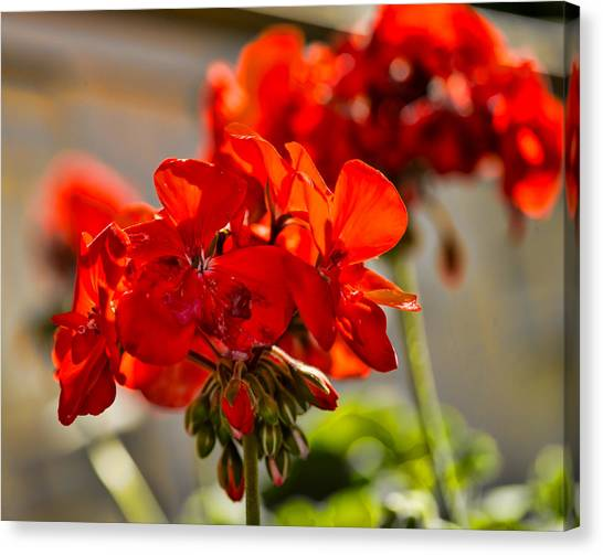 Canvas Print featuring the photograph neighbour's flower DB by Leif Sohlman