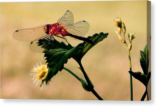 Neon Dragonfly Canvas Print by Mavis Reid Nugent
