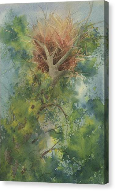 Nest At The Catherdral Pines Canvas Print