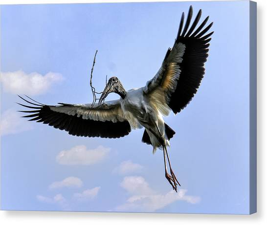 Nest Building Woodstork Canvas Print