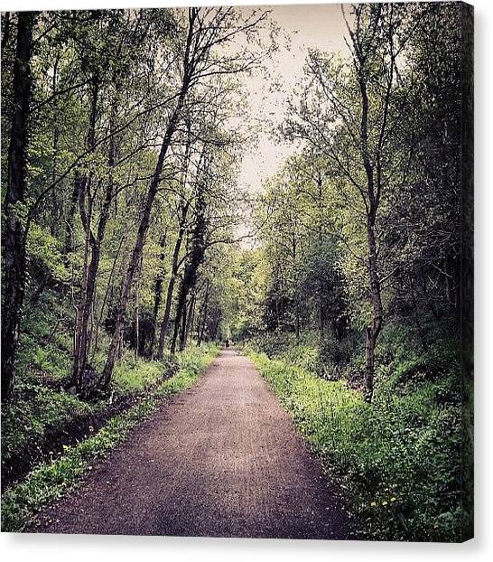 Forest Paths Canvas Print - Never Ending!  #nature #natural #beauty by Michael Henderson