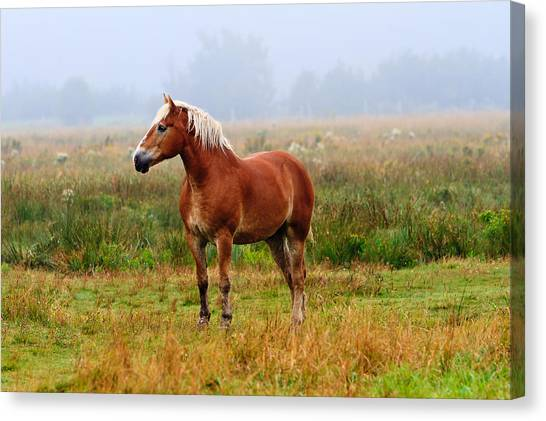 New Brunswick Horse Canvas Print