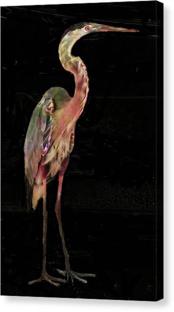 New Coat For The Heron Canvas Print by Carol Kinkead