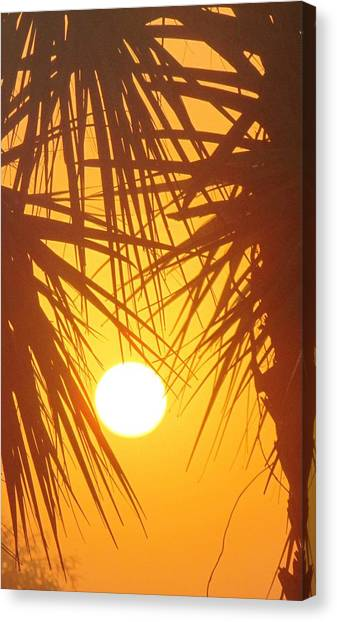 New Day In Paridise 2 Canvas Print by Will Boutin Photos