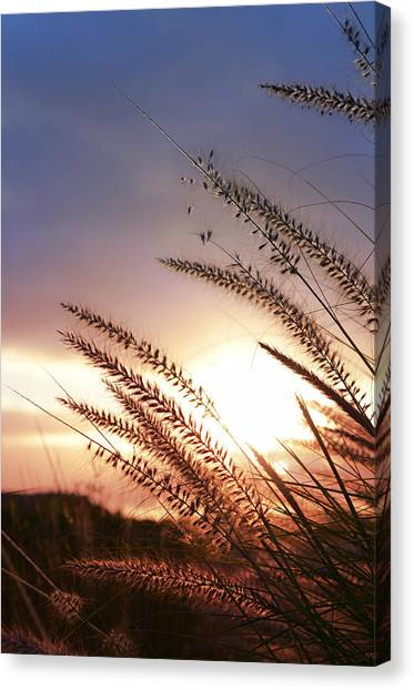 Seagrass Canvas Print - New Day by Laura Fasulo