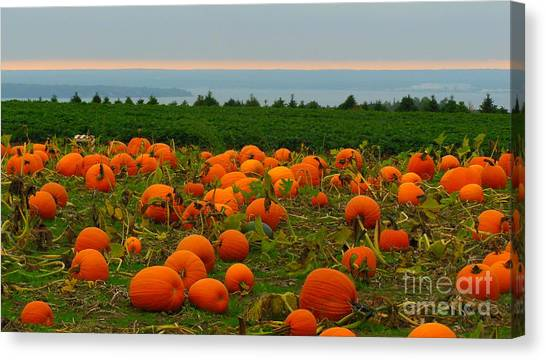 New England Pumpkin Patch Canvas Print by Eclectic Captures