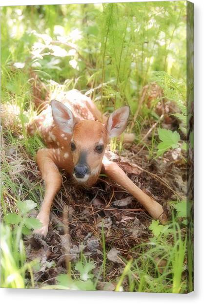 New Fawn In The Forest Canvas Print
