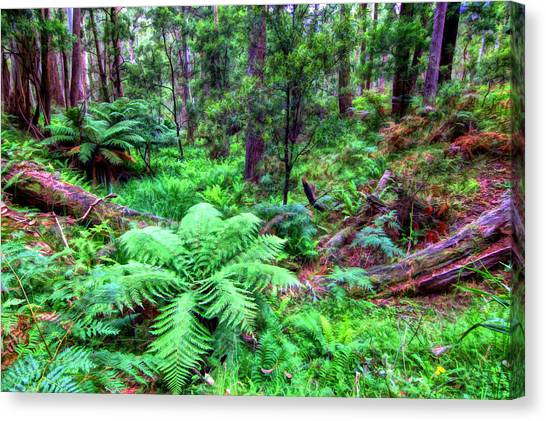 New Fern Gully  Canvas Print
