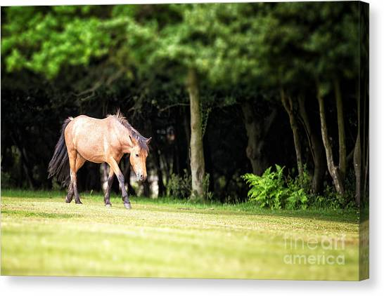 Moorland Canvas Print - New Forest Pony by Jane Rix