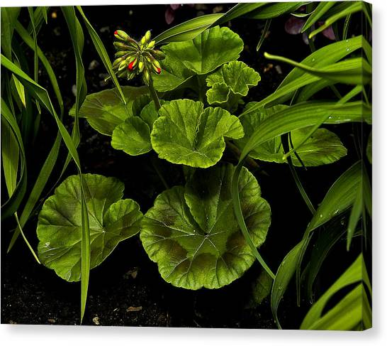 New Growth Canvas Print by David Marr
