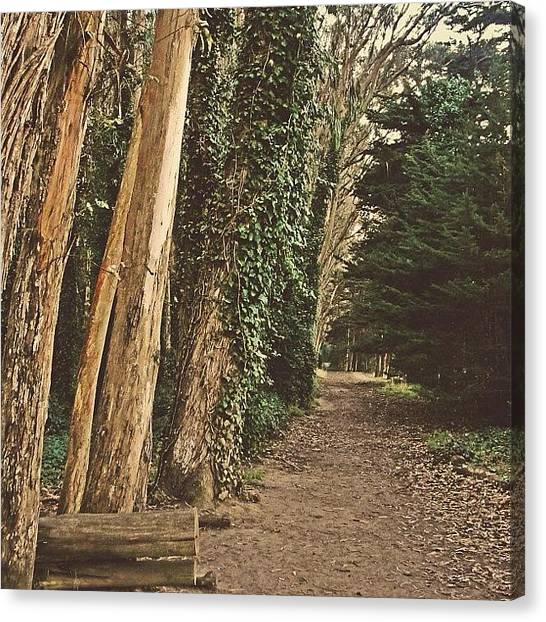 Forest Paths Canvas Print - New Journeys Ahead For 2013... #forest by Karen Winokan