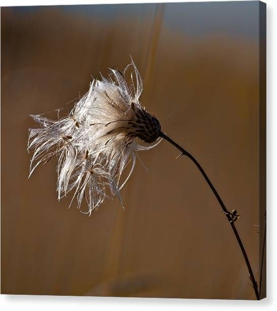 Canvas Print featuring the photograph New Life Is Comming by Leif Sohlman