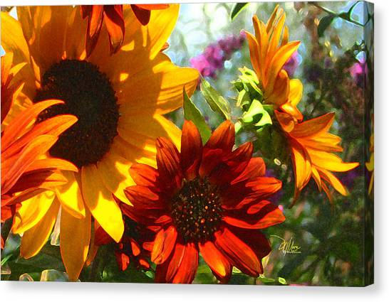 New Mexico Summer Sunflower Garden Canvas Print