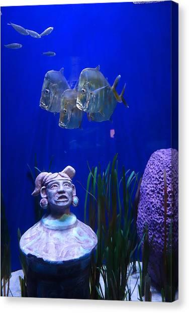 New Orleans Aquarium Canvas Print