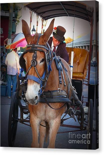 New Orleans Mule Carraige Canvas Print