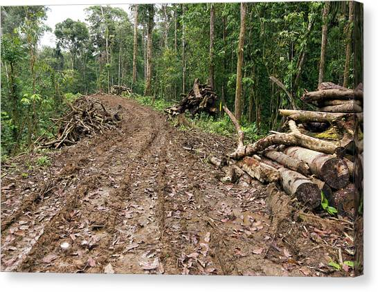 Deforestation Canvas Print - New Road Cut Through Tropical Rainforest by Dr Morley Read