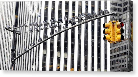 New York Pigeons Canvas Print by Stephen Richards