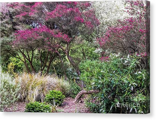 Canvas Print featuring the photograph New Zealand Tea Tree II by Kate Brown