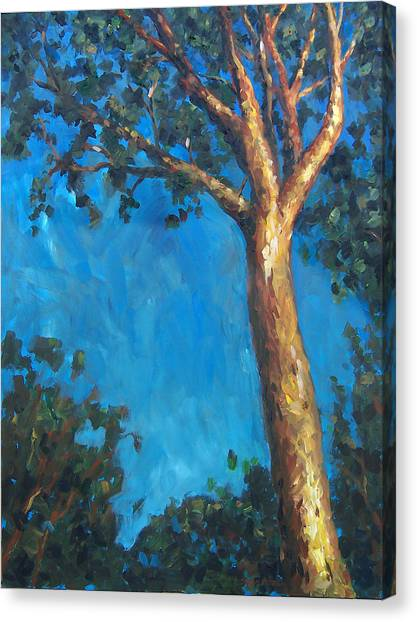 New Zealand Tree Canvas Print by Susan Moore