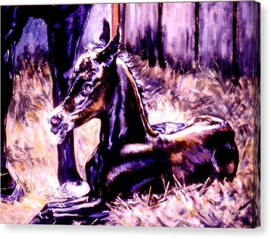 Newborn Foal Canvas Print