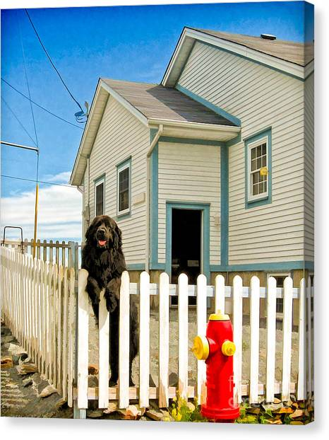 Newfoundland Dog In Newfoundland Canvas Print