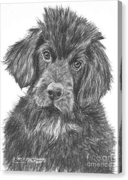 Newfoundland Puppy Sketch Canvas Print
