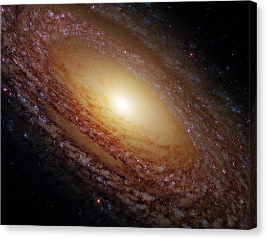Outer Space Canvas Print - Ngc 2841 by Ricky Barnard