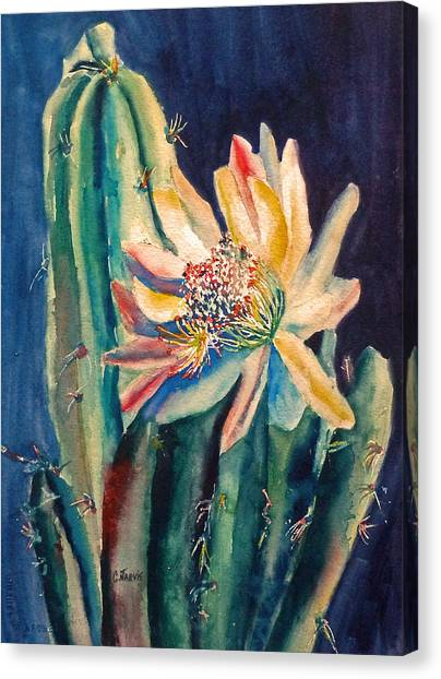 Night Blooming Cactus Canvas Print