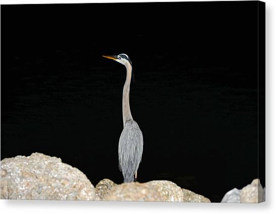 Night Of The Blue Heron 2 Canvas Print