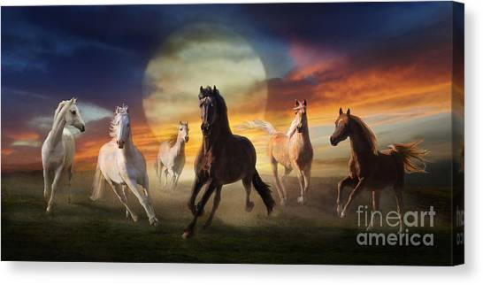 Canvas Print featuring the photograph Night Play by Melinda Hughes-Berland