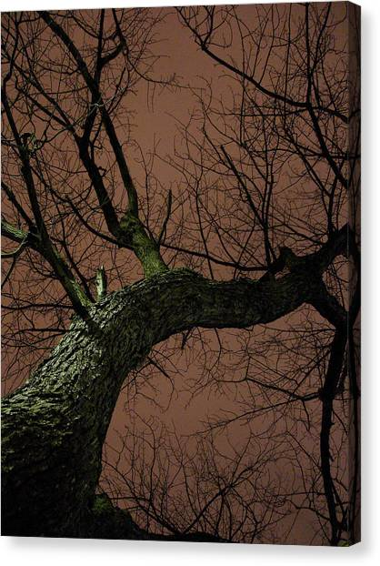 Night Tree Canvas Print by Michel Mata