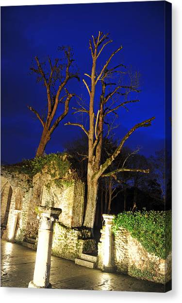 Night Trees Canvas Print by Stephen Richards