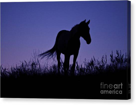 Nights Of Freedom Canvas Print