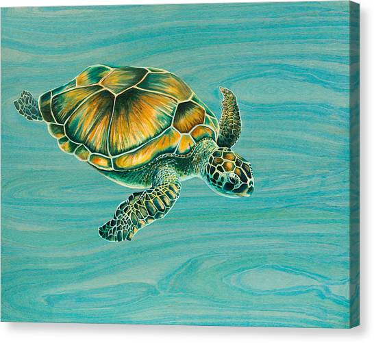Tortoises Canvas Print - Nik's Turtle by Emily Brantley