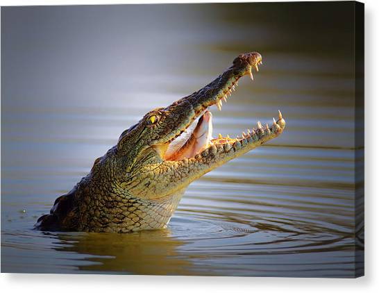 Jaws Canvas Print - Nile Crocodile Swollowing Fish by Johan Swanepoel