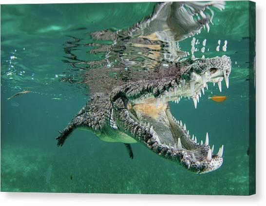Crocodiles Canvas Print - Nino The Croc by Q. Phia Sherry