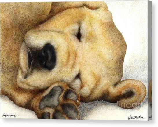 Yellow Lab Canvas Print - Nipper Nap... by Will Bullas