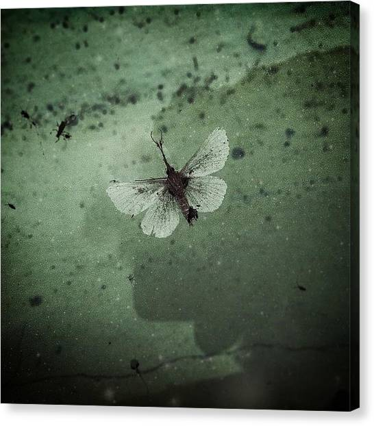 Harley Davidson Canvas Print - no; A Dust Coated Moth With by Harley Altaville