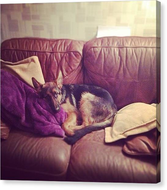German Shepherds Canvas Print - No Dogs On The Sofa? Hmm Prince #k9 by Sean OCallaghan