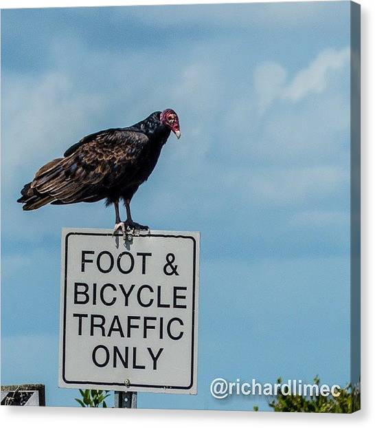Vultures Canvas Print - No Fly Zone.  #bird #vulture by Richard Lim