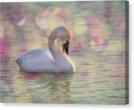 Canvas Print featuring the photograph Shy Swan by Patti Deters