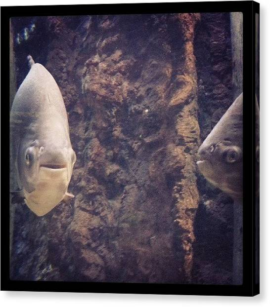 Fish Canvas Print - No One Pulls Off A Fish Face Quite Like by James Granberry