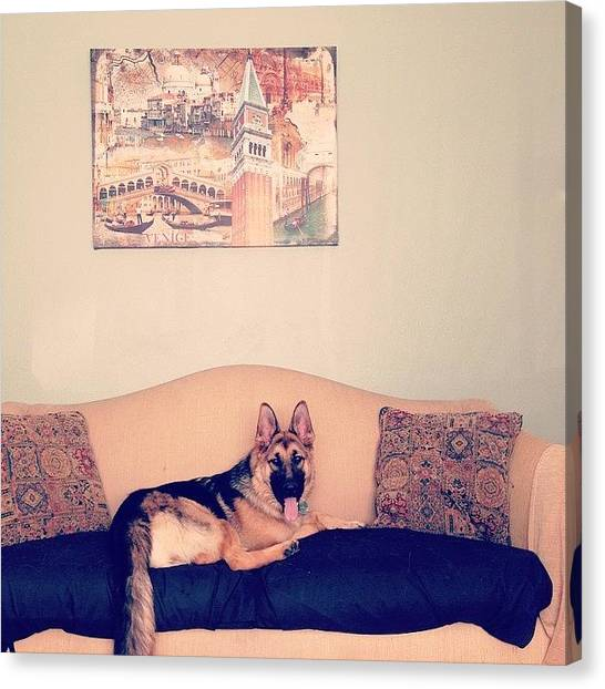 German Shepherds Canvas Print - Couch Model by Mikaela Pederson