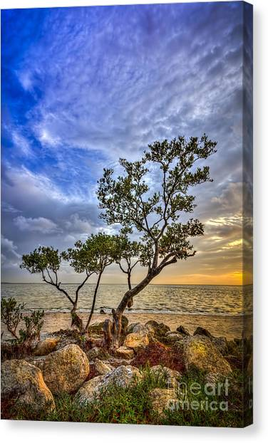 Mangrove Trees Canvas Print - No Stress Today by Marvin Spates