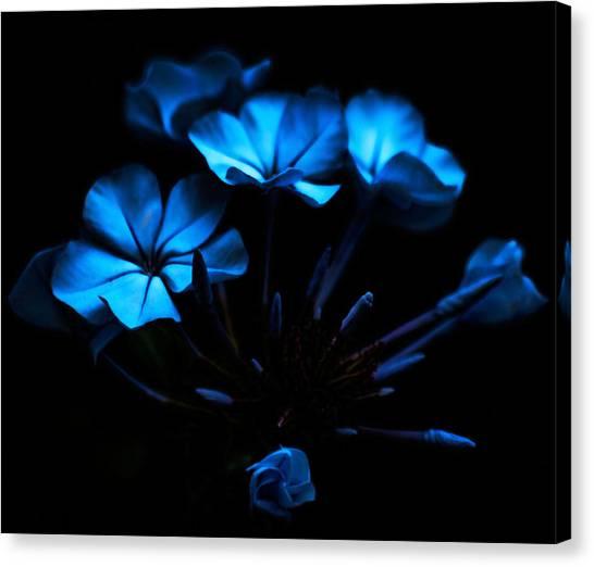 Nocturnal Blue Canvas Print