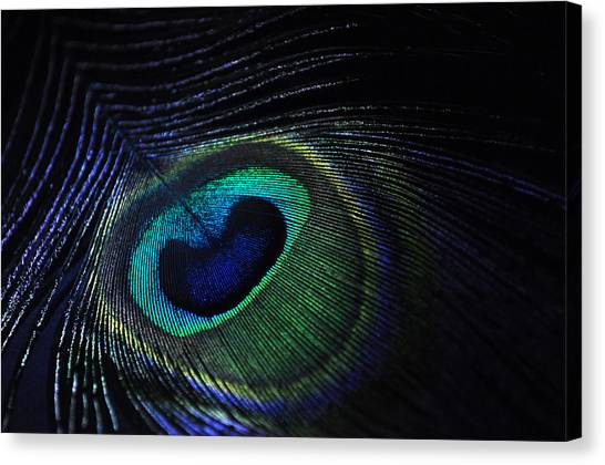 Nocturnal Pavo Canvas Print by Marina Slusar